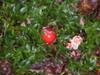 Mushroom_ball_2