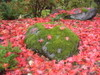 Rock_and_leaves_red_and_green