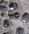Tiny_shells